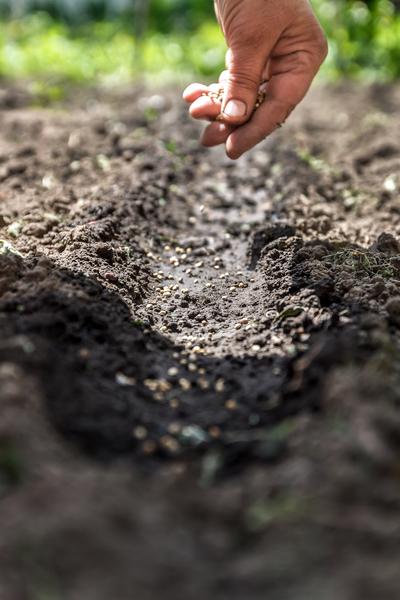 Bodenvorbereitung Gewächshaus düngen