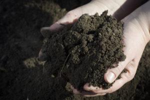 Bodenvorbereitung Gewächshaus