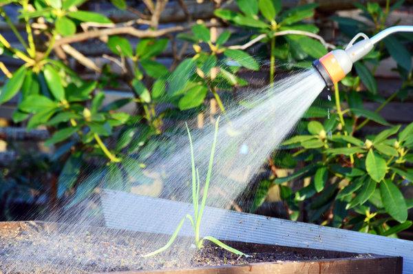 Insektenabwehr Wasser Bewässerung
