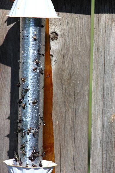 Insektenabwehr-Insektenfänger
