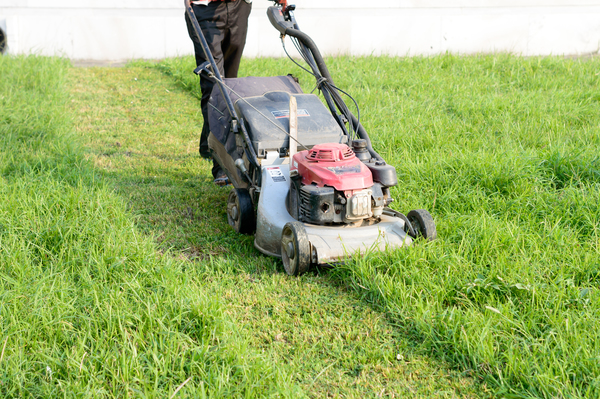 Rasen mähen mit dem Rasenmäher