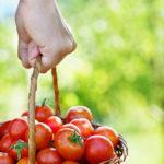 Kleine Tomaten im Korb