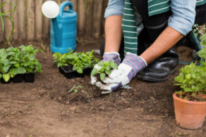 Mann pflanzt mit Handschuhen etwas im Gewächshaus an